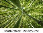 Bamboo Forest   Fresh Bamboo...