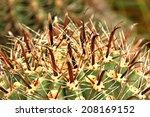 beautiful cactus in the garden | Shutterstock . vector #208169152