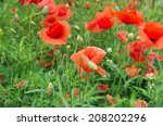 red poppies on green field | Shutterstock . vector #208202296