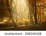 autumn forest | Shutterstock . vector #208240108