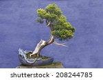 Bonsai Tree Juniper China ...