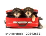 Two Cute Puppies Brothers In...