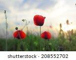 red poppy flowers on the sunset ... | Shutterstock . vector #208552702