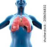human respiratory system   Shutterstock . vector #208656832