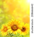 bright yellow sunflowers and sun | Shutterstock . vector #208666642