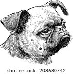 pug head | Shutterstock .eps vector #208680742