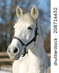 close up of a white horse in... | Shutterstock . vector #208716652