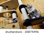 Stock photo cat playing in a huge cat house 20874496