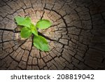 new development and renewal as... | Shutterstock . vector #208819042