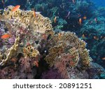 shoal of fish on the reef | Shutterstock . vector #20891251