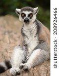 lemur. | Shutterstock . vector #208926466
