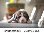 Stock photo new born beagle puppy 208983166