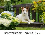 Dog Lying On A Garden Bench
