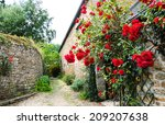 Red Roses Bushes Near Old Rural ...