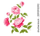 beautiful peonies on a white... | Shutterstock .eps vector #209393392
