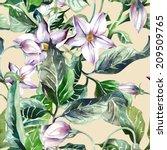 potatoes flowers seamless... | Shutterstock . vector #209509765