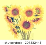 yellow sunflowers  close up ... | Shutterstock . vector #209532445