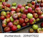 fresh harvested apples in... | Shutterstock . vector #209697022