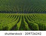 Vineyard landscape-Vineyard south west of France, Bordeaux Vineyard