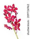 red orchid on white background | Shutterstock . vector #209726962