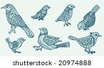 hand drawn birds | Shutterstock .eps vector #20974888
