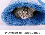 Stock photo beautiful kitten in rolled carpet on light background 209825818