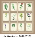 aroma,aromatic,balm,banner,bee,botany,brush,card,celery,collection,cooking,cuisine,culinary,dill,drawn