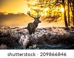 red deer | Shutterstock . vector #209866846