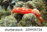 a spanish shawl nudibranch in...   Shutterstock . vector #209935726