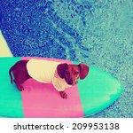 A Cute Dachshund On A Board In ...