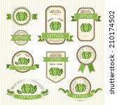 lettuce labels. vegetables... | Shutterstock .eps vector #210174502