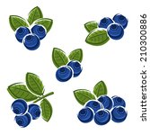 blueberries set. vector  | Shutterstock .eps vector #210300886