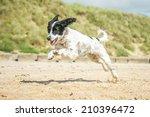 Stock photo dog 210396472