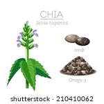 superfood chia seeds. vector... | Shutterstock .eps vector #210410062