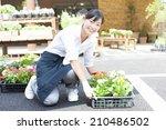 the female clerk in the flower... | Shutterstock . vector #210486502