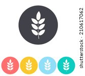 barley icon   vector... | Shutterstock .eps vector #210617062
