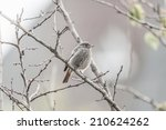 photo of a baby bird on a tree... | Shutterstock . vector #210624262