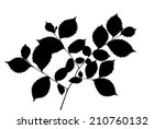 silhouette of elm twig with...