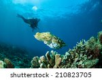 broadclub cuttlefish sepia... | Shutterstock . vector #210823705