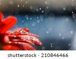 Droplet On A Red Flower Petal...
