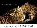 leopard portrait | Shutterstock . vector #210869662