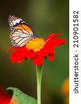 Stock photo beautiful cosmos flowers and butterfly 210901582