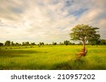 Rice Paddy Fields At Morning...