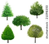 fresh tree collection isolated... | Shutterstock . vector #21098350