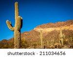 Saguaro Cactus In The Desert.