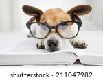 cute dog tired student reading... | Shutterstock . vector #211047982