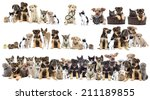 Stock photo set of pets cat and dog 211189855