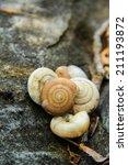 small shells | Shutterstock . vector #211193872