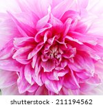 Large Pink Flower Close Up