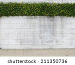 cement wall and green leaf for... | Shutterstock . vector #211350736